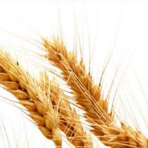 Grain Blends
